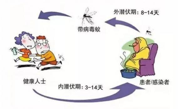 登革热预防知识,珠海创卫白蚁虫鼠防治公司给大家宣传