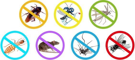 白蚁防治药剂与农用杀虫剂的区别,珠海城市害虫协会专家来解说